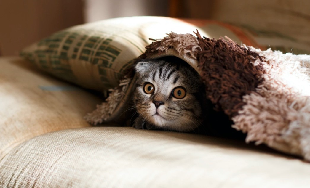 A cat poking its head out from under a bed cover