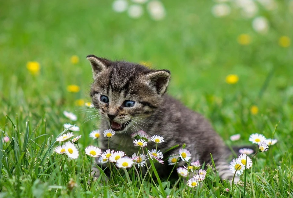 A cat sitting on the grass, looking at flowers